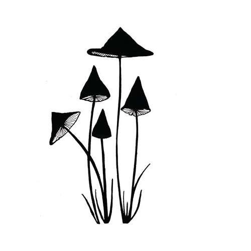 Lavinia Stempel, 5 Lamellen-Pilze